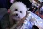 [抽獎-5] 貼一張狗狗照片抽 小米行動電源